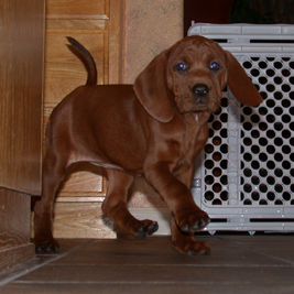 Puppy Sadie
